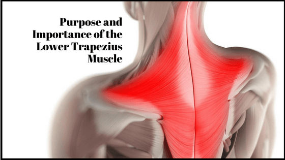 Purpose and Importance of the Lower Trapezius Muscle - Oahu Spine ...