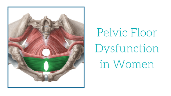 Pelvic Floor Dysfunction In Women Oahu Spine Amp Rehab